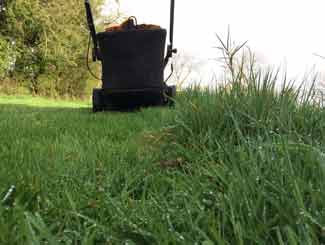 Mower in a garden